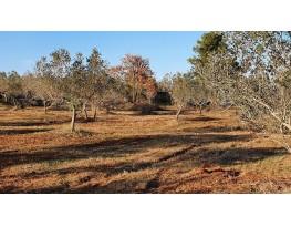 Poljoprivredno zemljište, Prodaja, Fažana, Fažana